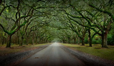 Photographing The Wormsloe Plantation